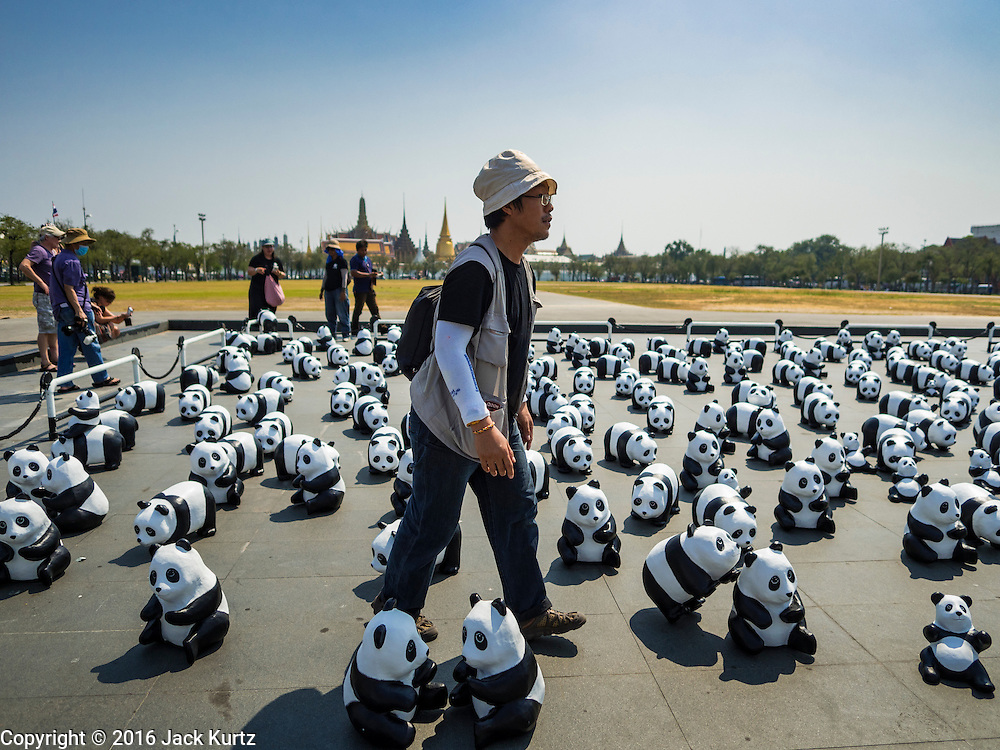 """04 MARCH 2016 - BANGKOK, THAILAND: A panda wrangler carries a couple of paper maché pandas for the """"1600 Pandas+ World Tour in Thailand: For the World We Live In and the Ones We Love"""" opening on Sanam Luang in Bangkok. The 1600 paper maché pandas, an art installation by French artist Paulo Grangeon will travel across Bangkok and parts of central Thailand for the next week and then will be displayed at Central Embassy, a Bangkok shopping mall, until April 10. The display of pandas in Thailand is benefitting World Wide Fund for Nature - Thailand and is sponsored by Central Embassy with assistance from the Tourism Authority of Thailand and Bangkok Metropolitan Administration and curated by AllRightsReserved Ltd.     PHOTO BY JACK KURTZ"""