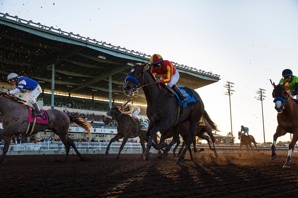 December 12, 2015:  Pretty and Cool with Martin Garcia up race in the Starlet Stakes at Los Alamitos Race Track in Cypress California. Evers/ESW/CSM
