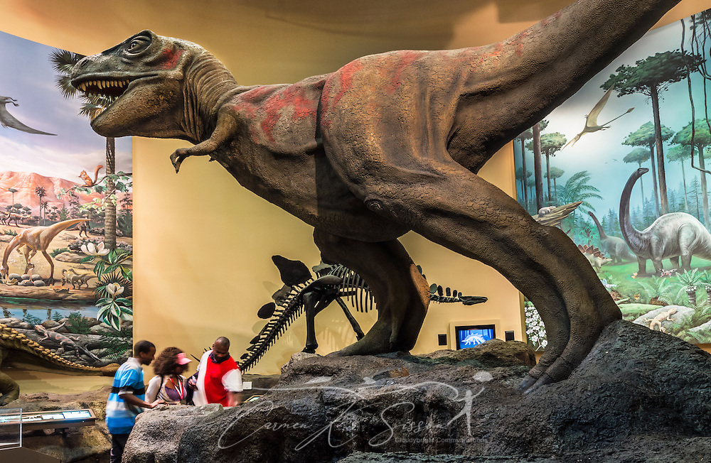 """A dinosaur is displayed in the dinosaur gallery at Fernbank Museum of Natural History, May 23, 2014, in Atlanta, Georgia. The museum opened in 1992 and is known for its massive dinosaur exhibitions. The museum also has an IMAX theater and holds popular public events like monthly salsa dance nights and the weekly """"Martinis & IMAX"""" program. (Photo by Carmen K. Sisson/Cloudybright)"""