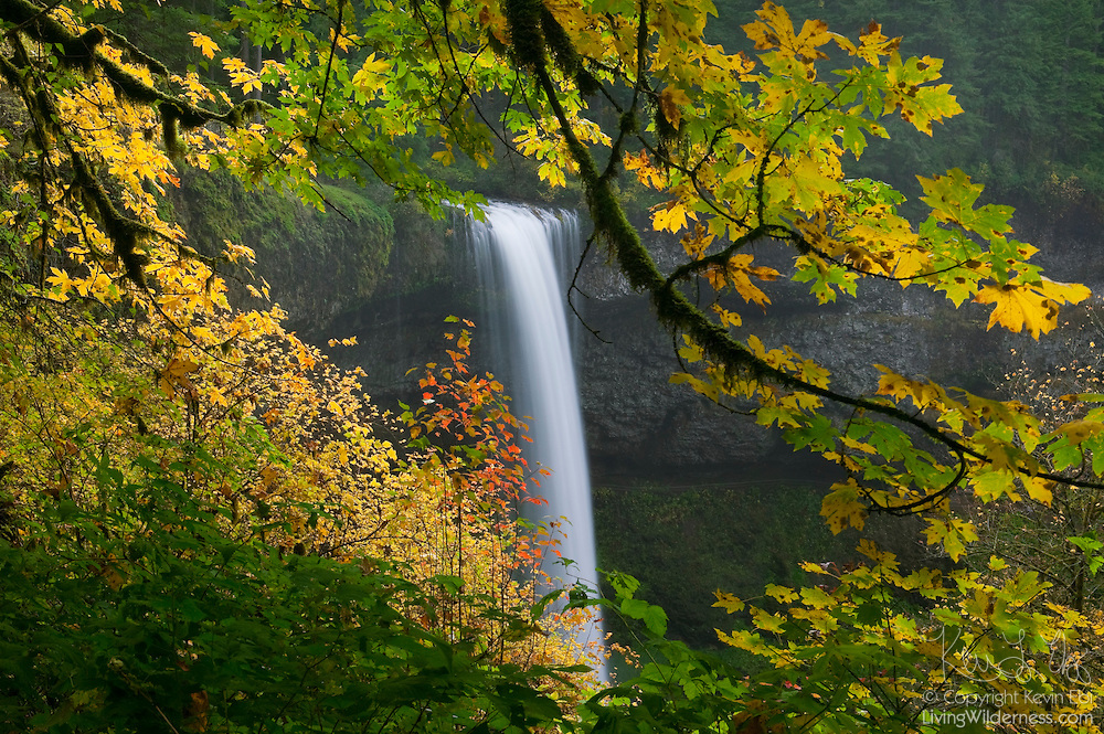 South Silver Falls, one of several scenic waterfalls in Silver Falls State Park, Oregon, is surrounded by colorful maple leaves in early fall. South Silver Falls is 177 feet (54 metres) tall.