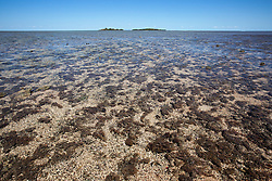 Sea grass and algae cover Montgomery Reef. On a falling tide the reef appears to rise from the ocean as water flows off the reef.  At 292km2, Montgomery is Australia's largest inshore reef.