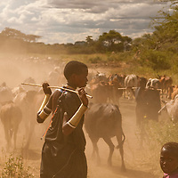 Brabaig people herding Cattle, Tanzania.