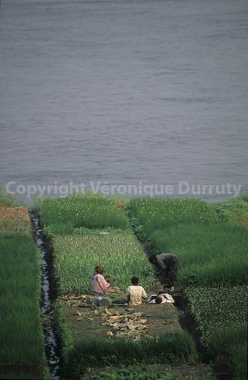 PEASANTS WORKING IN A FIELD ALONG THE CONGO RIVER NEAR BRAZZAVILLE, CONGO
