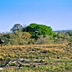 Battle at Kruger No. 2