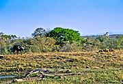 Battle at Kruger No. 2