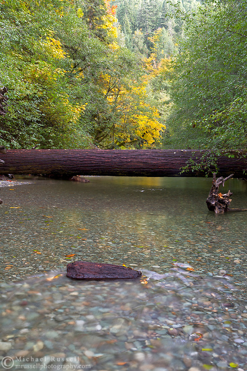 A fallen tree across the Cameron River in Macmillan Provincial Park near Port Alberni, British Columbia, Canada
