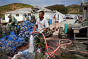 Israel Castillo hoses off oysters at Drakes Bay Family Farms near Pt. Reyes, Calif., July 2, 2011.