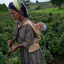 Fifteen-year-old Destaye is seen with her son in the fields near Bahir Dar, Ethiopia on Aug. 9, 2012. Destaye and her husband Addisu, 27, divide their time between working in the fields and taking care of their 6-month-old baby. Like many other young couples, they tend to the domestic, economic and personal demands of being young parents. At the time of their marriage, when Destaye was age 11, she was still in school and her husband expressed interest in letting her continue her education. Since the birth of their son, however, she has had to confine her life exclusively to being a wife and mother.