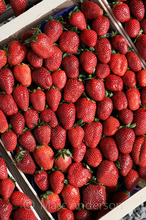 Strawberries in a crate