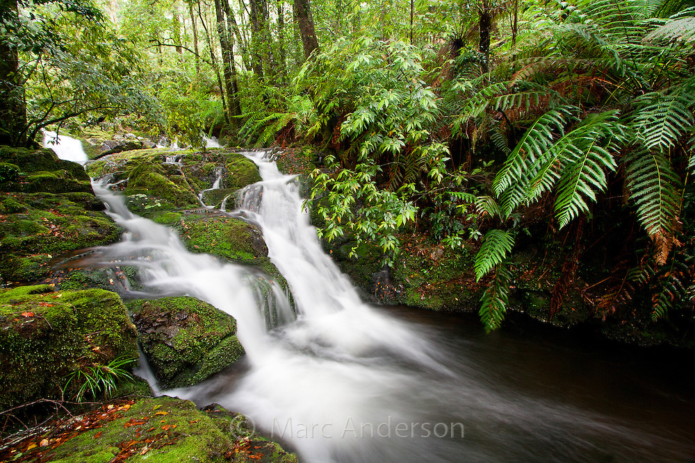 Flowing stream in temperate rainforest, Barrington Tops National Park, Australia