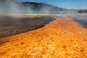 Buffalo footprints in the orange run-off from Grand Prismatic Spring, Yellowstone National Park