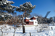 Winter in the Chinese Garden, Montreal, Quebec, Canada