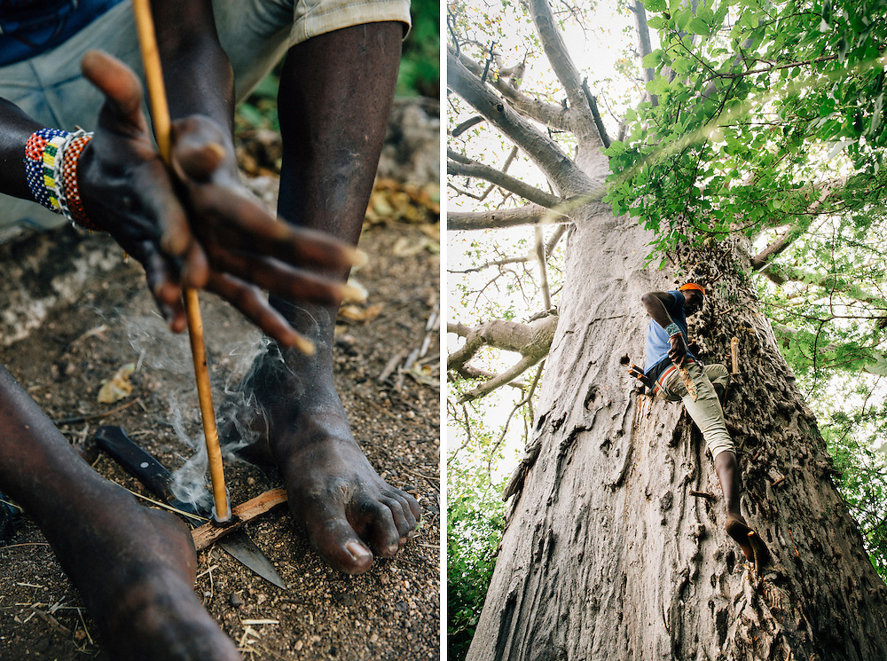 Benja, 20, a male member of the Hadza tribe forages honey from a bee's nest in a Baobab tree. Yaeda Valley, Northern Tanzania. Photo by Greg Funnell, March 2016.