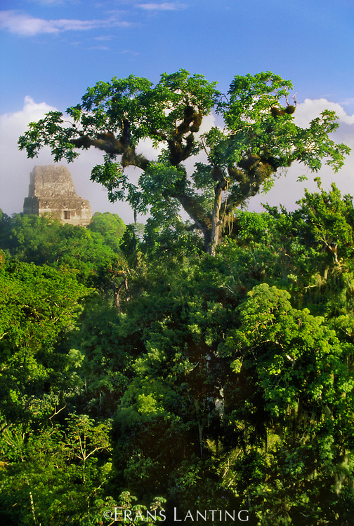 Rainforest surrounding Mayan temple, Tikal National Park, Guatemala