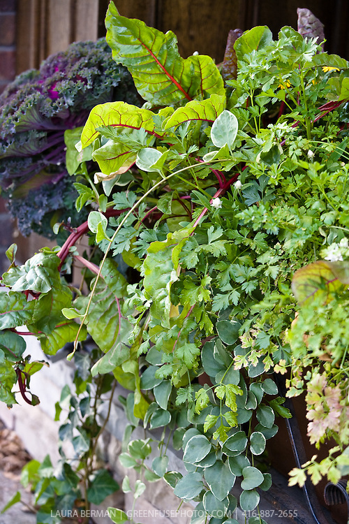 Chard and other edibles in an ornamental edible window box planting
