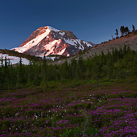 OR01680-00...OREGON - Sunrise on Mount Hood from Wy'east Basin in the Mount Hood Wilderness area.