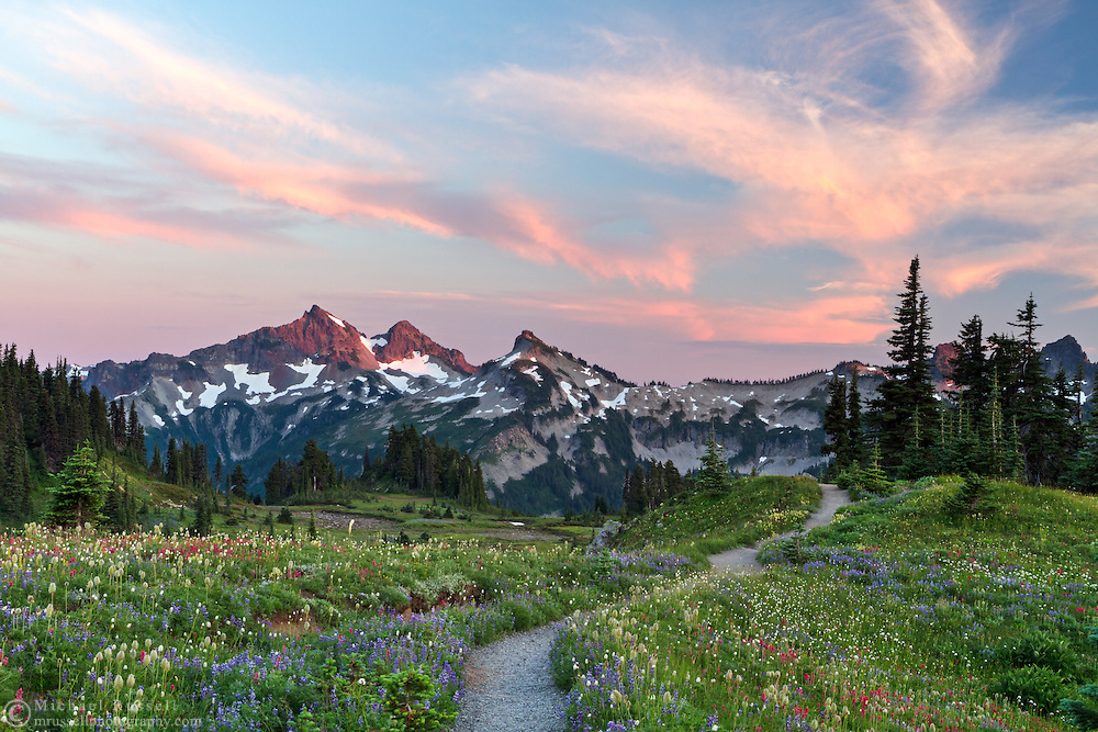 Summer wildflowers on Mazama Ridge with the Tatoosh Range in the background - in Mount Rainier National Park, Washington State, USA