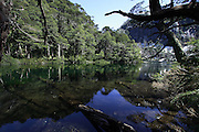 Reflections of araucaria trees and other vegetation in Lago Chico, in Huerquehue National Park, in Chile's Lake District