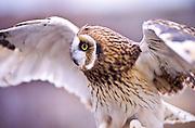 Owl along Boise River
