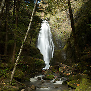 Susan Creek Falls is a 35 foot high waterfall that feeds into the Umpqua River.  The stream passes through dark basalt rocks as it heads toward the Umpqua River. .The Umpqua River (UHMP-kwah) is on the Pacific coast of Oregon in the United States. It is approximately 111 miles (179 km) long. A maintained trail runs for 77-miles along the river through the beautiful forests and over small streams.  The river drains an expansive network of valleys in the mountains west of the Cascade Range and south of the Willamette Valley, from which it is separated by the Calapooya Mountains.