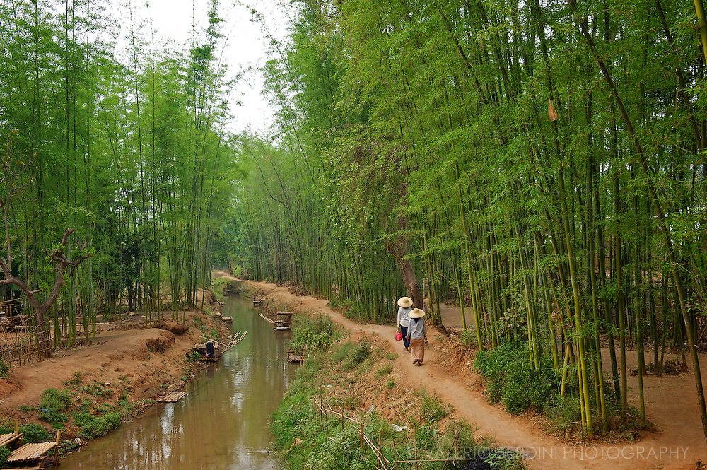 People walk back to the village along a canal streaming in the middle of a bamboo forests.