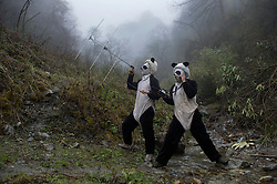 Panda keepers Ma Li and Liu Xiao Quiang check the radio signal on newly released cub Hua Jiao, 1,  and her mother Cao Cao, 13, who were taken from an enclosure at the Wolong China Conservation &amp; Research Center for the Giant Panda, (CCRCGP) and brought to a much larger enclosure at higher altitude for the third and final stage of wild panda training April 21, 2015. If the cub passes all the tests, she will be released into the wild in the fall.   Chinese scientists and their international counterparts have cracked the puzzle of successfully breeding pandas in captivity and now they are sending these captive born pandas back into the wild. In a region where bad environmental news is common, the Giant Panda might prove to be the exception and a testament to the perseverance and efforts of Chinese scientists and conservationists. By breeding and releasing pandas, augmenting existing populations, and protecting habitat, China may be on its way to successfully saving its most famous ambassador and in the process put the wild back into an icon.<br /> (Photo by Ami Vitale)