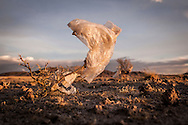 08/11/2014 - Uyuni, Bolivia:Plastic tree #53. Plastic bags are part of the landscape of the Bolivian Altiplano. The accumulation of plastic bags on the environment cause deterioration of the landscapes and agriculture soils and it is associated to the death of domestic and wild animals.