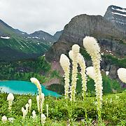 Montana: Glacier NP: Many Glacier hikes
