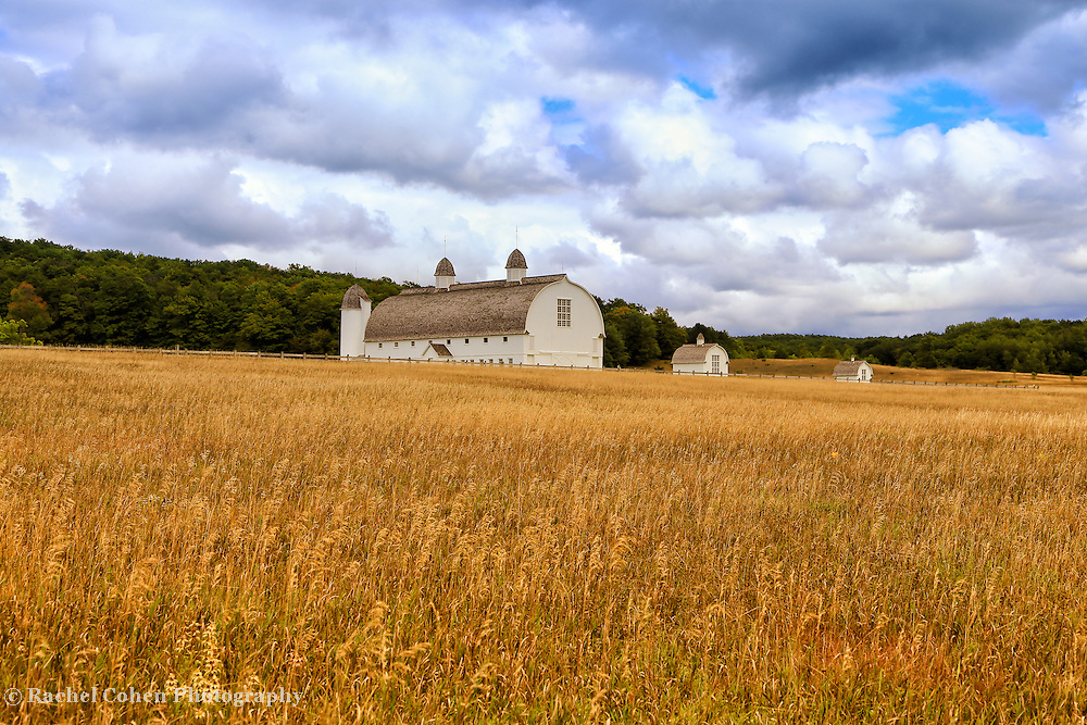 &quot;White Barn and Field&quot;<br /> <br /> Beautiful rural Michigan barn and golden field in early autumn!!<br /> <br /> Autumn Landscapes by Rachel Cohen