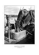 Horses drinking from a stone trough at Ballinasloe Horse Fair, County Galway.<br /> <br /> 25th April 1957<br /> <br /> 25.07.1957