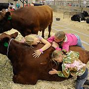 Loving on a heifer, MT State Fair