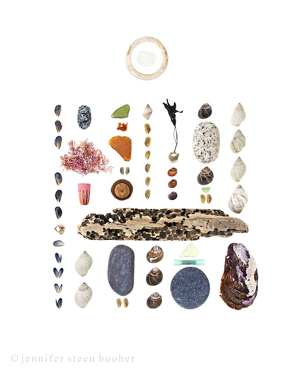 From left to right, top to bottom:<br /> <br /> Hovering above: plastic ring, sea glass<br /> Row 1: young Blue Mussels (Mytilus edulis), Northern Rock Barnacle (Semibalanus balanoides), more mussels<br /> Row 2: granite beach stone, Corallina officinalis, plastic marker cap, driftwood, Dog Whelks (Nucella lapillus)<br /> Row 3: sea glass, fish eggs (dried out now but there&rsquo;s a photo of them fresh in the CW2 blog post), sea glass, more mussels (not sure if they&rsquo;re Blue or Horse Mussels), acorn (probably Quercus rubra), beach stone, mussels<br /> Row4: Dog whelk, more mussels, Common Periwinkles (Littorina littorea)<br /> Row 5: Seaweed attached to barnacle, Smooth Periwinkles (Littorina obtusata), sea glass, plastic thingy (I think it&rsquo;s from a glow stick), beach stone<br /> Row 6: Common Periwinkles, granite beach stone, sea glass, mussels<br /> Row 7: Dog whelks, Horse Mussel (Modiolus modiolus)