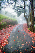 Curvy Road with Red Leaves