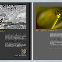 North American Nature Photographers Association (NANPA) 2012 Showcase - Top Ten images in Expressions Magazine