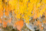 North Lake Fall Color Water Reflections, Eastern Sierra, California