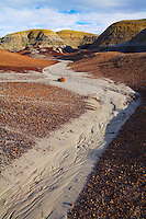 A dry wash in the Bisti Wilderness. Northwest New Mexico near the Four Corners.