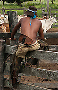 Pantanal cowboy 'Boiadeiro' ('Junior Perera) in the Central Pantanal sitting on cattle corral fence. They wear hard-wearing leather chaps over jeans or even shorts. Boots or bare foot depending on the season or where they are working. Many carry guns as there are cattle thiefs who attempt to steal the cattle as the fazendas are large. The 'boiadeiros' often decorate their clothing and horses and tack with pieces of metal. Junior's hat band is made from soda can tops.<br /> Pantanal. Largest contiguous wetland system in the world. Mato Grosso do Sul Province. BRAZIL.  South America