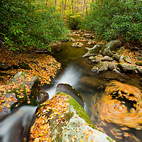 Fallen leaves cover the rocks and swirling waters of Kephart Prong. Smokey Mountains, TN.