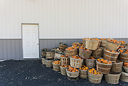 baskets of vegetables and gourds against a metal barn in The Hamptons