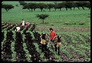 03: FARMING FIELDS