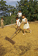 Family work: girls and father spreading coffee beans to dry in the sun, Cuetzalan, Puebla State, Mexico.