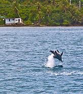 Guam Dolphins Piti Guam