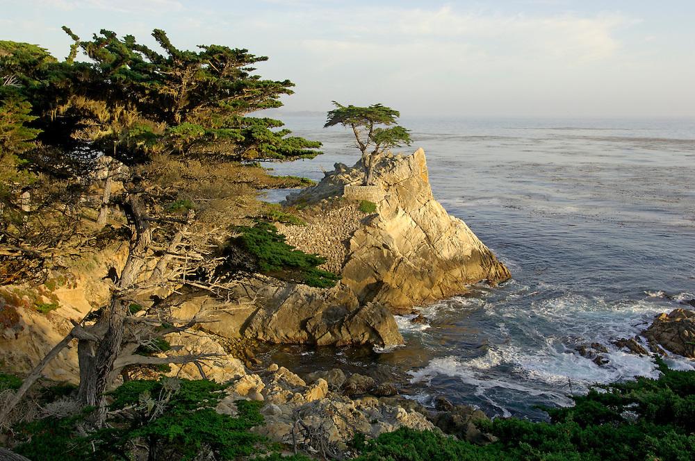 The Lone Cypress, Pebble Beach, 17 Mile drive, Monterey Peninsula, Monterey, California, United States of America
