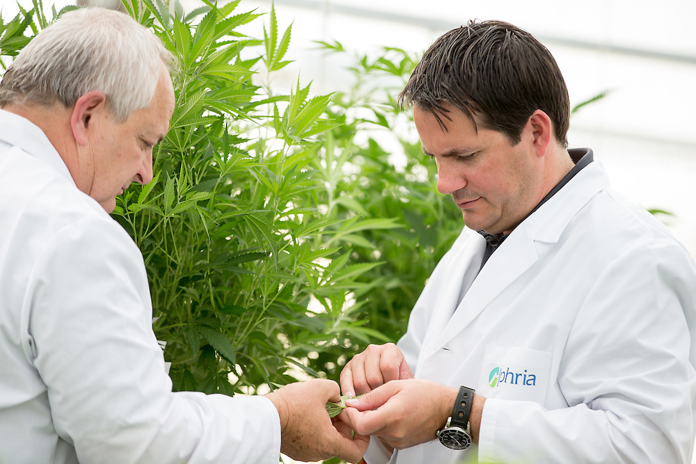 Leamington, Ontario ---2014-05-26--- Cole Cacciavillani, left, and John Cervini of Aphria, inspect some of their young Medical Marihuana plants at the company's greenhouse in Leamington, Ontario, May 26, 2014.<br /> GEOFF ROBINS The Globe and Mail