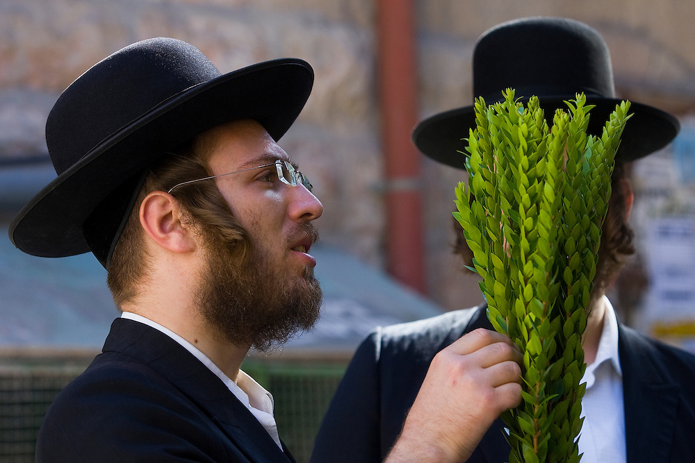 """Ultra orthodox Jewish men check myrtle branches for blemishes to determine if they are ritually acceptable before buying them as one of the four items used as a symbol on the Jewish holiday of Sukkot, in the Mea Shearim ultra-orthodox neighborhood of Jerusalem, Tuesday, Sept 29, 2009. According to the Bible, during the Sukkot holiday, known as the Feast of the Tabernacles, Jews are commanded to bind together a palm frond, or """"lulav,"""" with two other branches, along with an """"etrog,"""" they make up the """"four species"""" used in holiday rituals. The week long holiday begins Friday. Photo by Olivier Fitoussi /ABACAUSA.COM"""