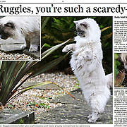 PIC BY GEOFF ROBINSON PHOTOGRAPHY 07976 880732.<br /> <br />  CUTINGS CUTTINGS RUGGLES CATS
