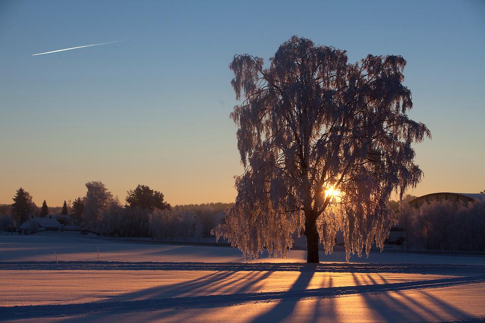Norwegian winterscape