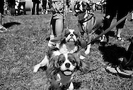 Dog Fest 2014 was held Sunday, June 8, 2014, at Angell Park in Sun Prairie, Wisconsin.