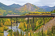 Alaska Railroad Passanger train crosses the Nenana River in Denali National Park in the Fall
