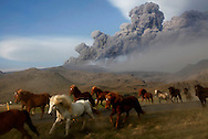 A herd of horses cross the road as they commute to an other pasture south of Iceland's Eyjafjallajokull.<br /> The volcano is threatening again to close European skies air traffic with a new ash cloud. 08 May 2010. &copy; Etienne de Malglaive.